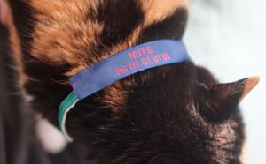 Votre chat fugue ? Utilisez une étiquette personnalisée pour le retrouver !